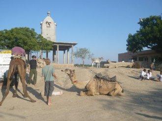 Camel posing