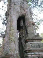 Genitalia tree