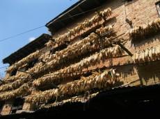 Corn drying, Changu Narayan